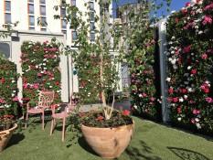Case Study – NHS Nightingale Hospital Staff Wellbeing Garden by Biotecture Ltd