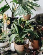 Houseplant travel: Create that holiday feeling through the power of plants