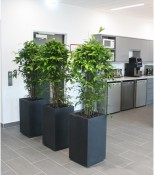 Case Study – Mogrify by The Good Plant Company, Gold Leaf Award under £10K