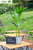 Howea forsteriana named Favourite Office Plant of the Year