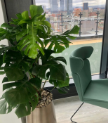 Case Study – Vox Manchester by Urban Planters North West