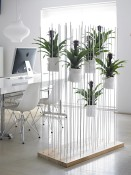 Plants to improve productivity
