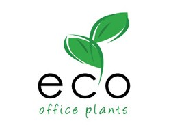 Eco Office Plants