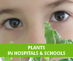 Plants in Hospitals and Schools